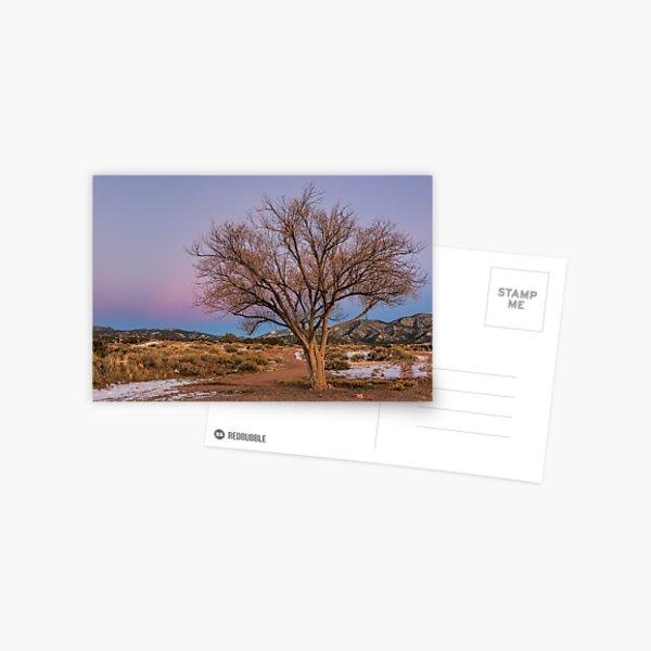 Contemplation Tree Postcard