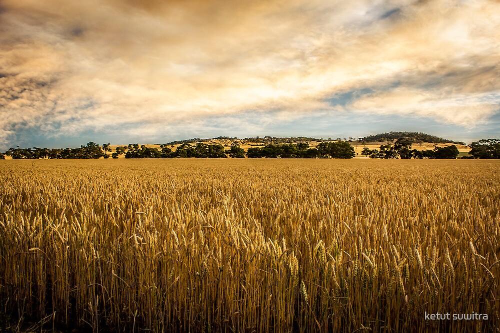 wheat farm by ketut suwitra