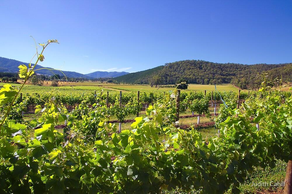 Boyntons Winery by Judith Cahill