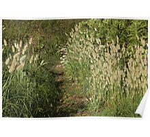 Grassy Path Poster