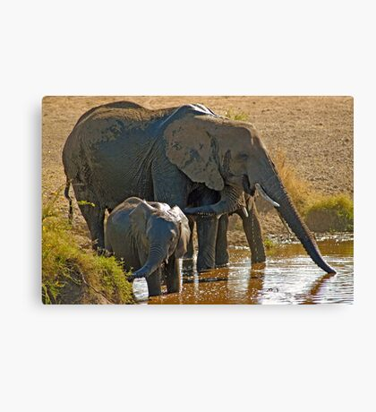 Family drinking Canvas Print