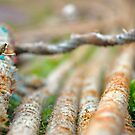 Fishdock Ropes by Simon Mears