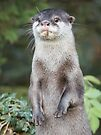 Otter paw-trait by Anthony Brewer