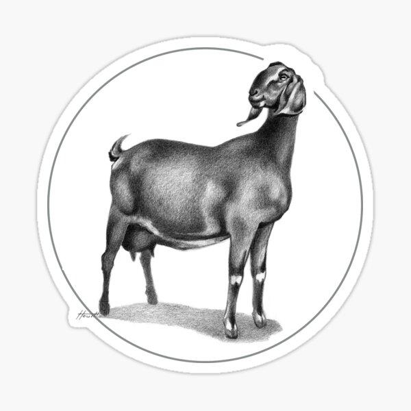 Nubian Milking Doe Sticker