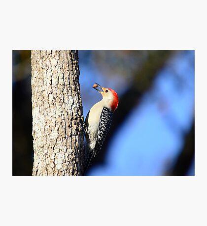 Woodpecker Up Close Photographic Print