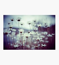 Do you suppose she's a wildflower? Photographic Print
