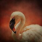 Flamingo Pink by swaby