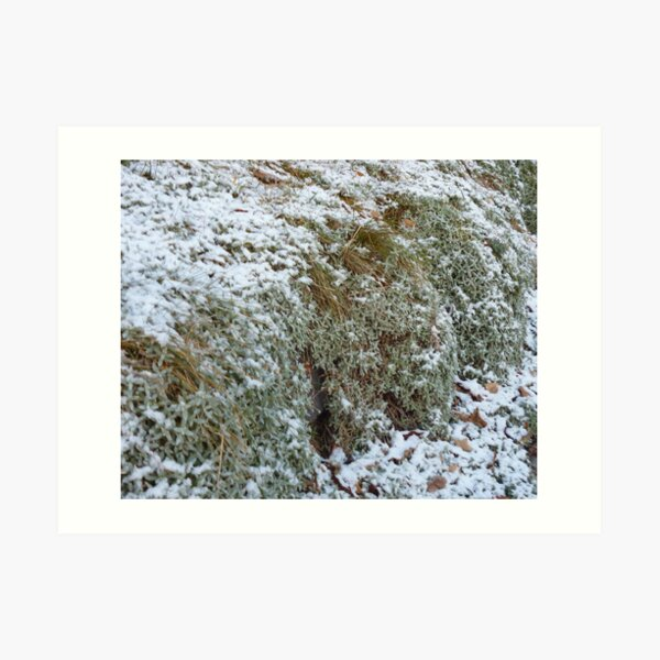 frosty morning out my door Art Print