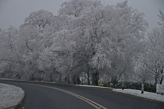Winter Wonderland.. by Lauren Tucker