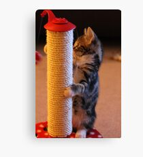 Pole Cat Canvas Print