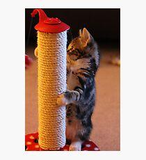 Pole Cat Photographic Print