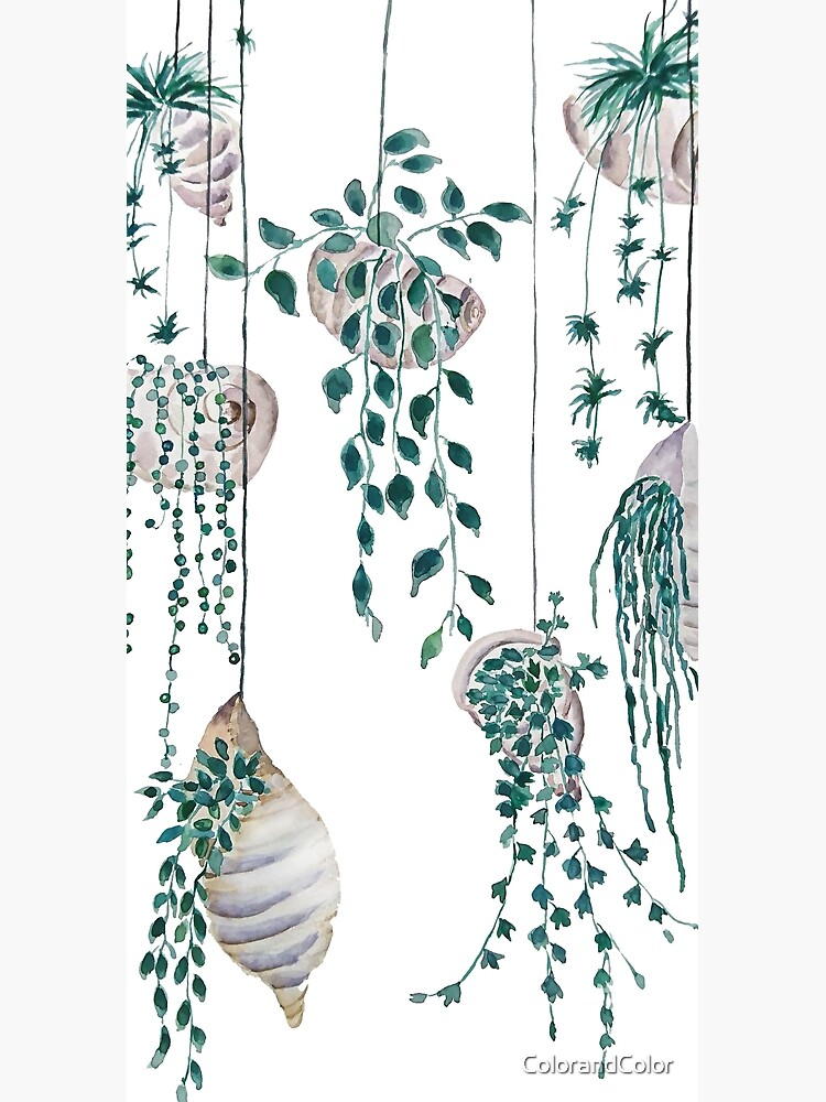 Hanging plants in seashells  by ColorandColor