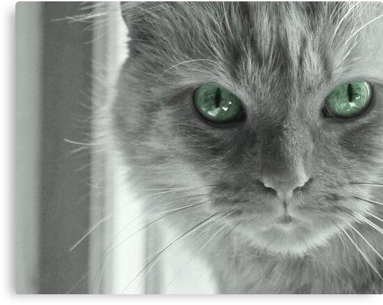 Eyes of Green ~ by Renee Blake