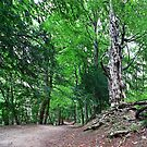 The Enchanted Forest Path by mps2000