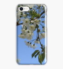 Cherry blossom twig iPhone Case/Skin