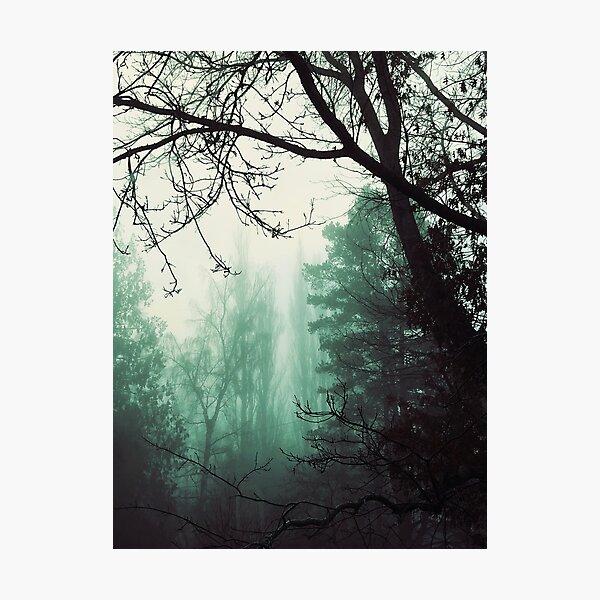 Mysterious Fog Photographic Print
