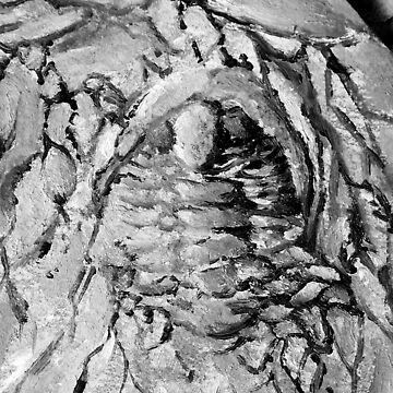 Painted Trilobite Fossil - black & white by flyingtrilobite