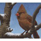Cardinal 1 - Christmas card by llawrence