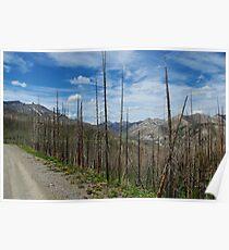Rocky Mountain Wilderness, Montana Poster