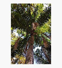 tall palm Photographic Print