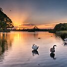 Sunset - Don't be a goose! by Jason Ruth