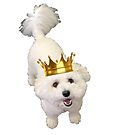 King Pup by megsiev
