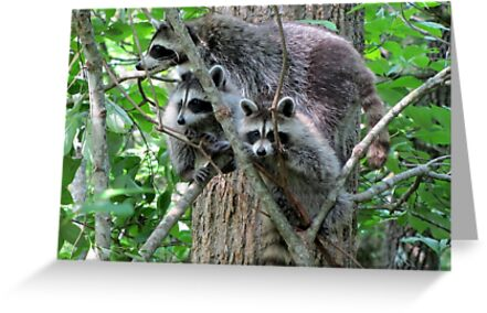 Mom, The Camera Is Over There! by Jean Gregory  Evans