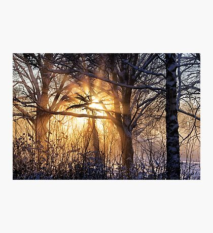 Cathedral of light Photographic Print