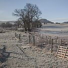 A Frosty Morning by Brian Kerr