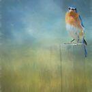 Little Bluebird by KathleenRinker
