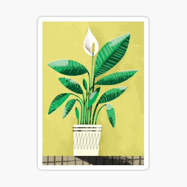 Peace Lily Plant on Yellow Sticker