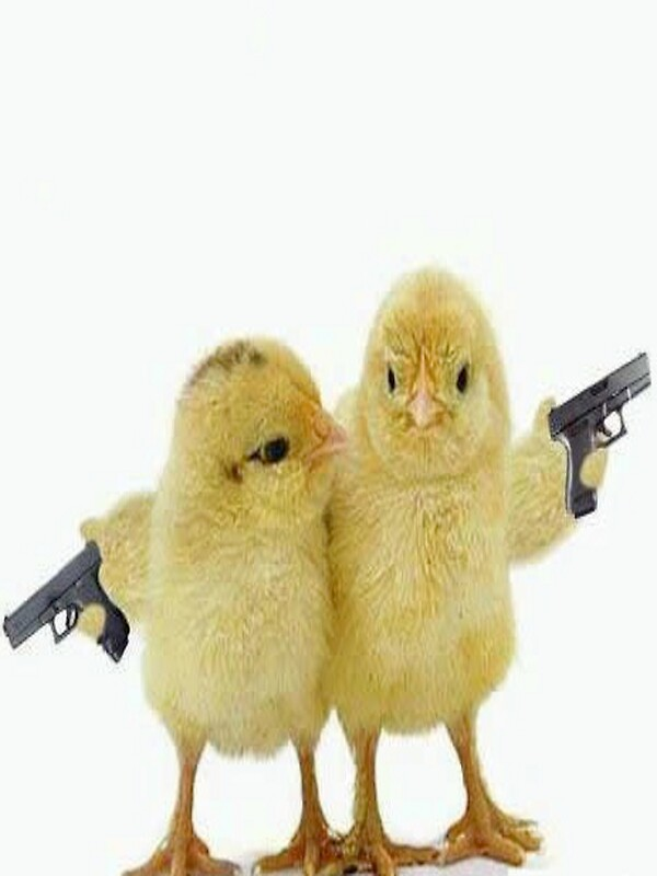 Quot Baby Chickens With Guns Quot Stickers By Jackwatson2109