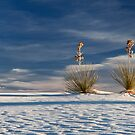 Yuccas in the Sand by Jeanne Frasse