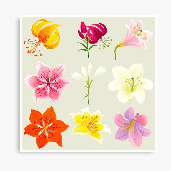 Colorful Lilies Canvas Print