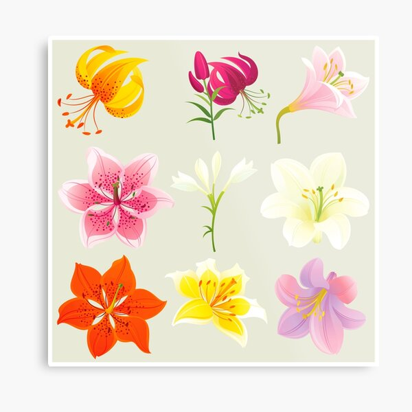Colorful Lilies Metal Print