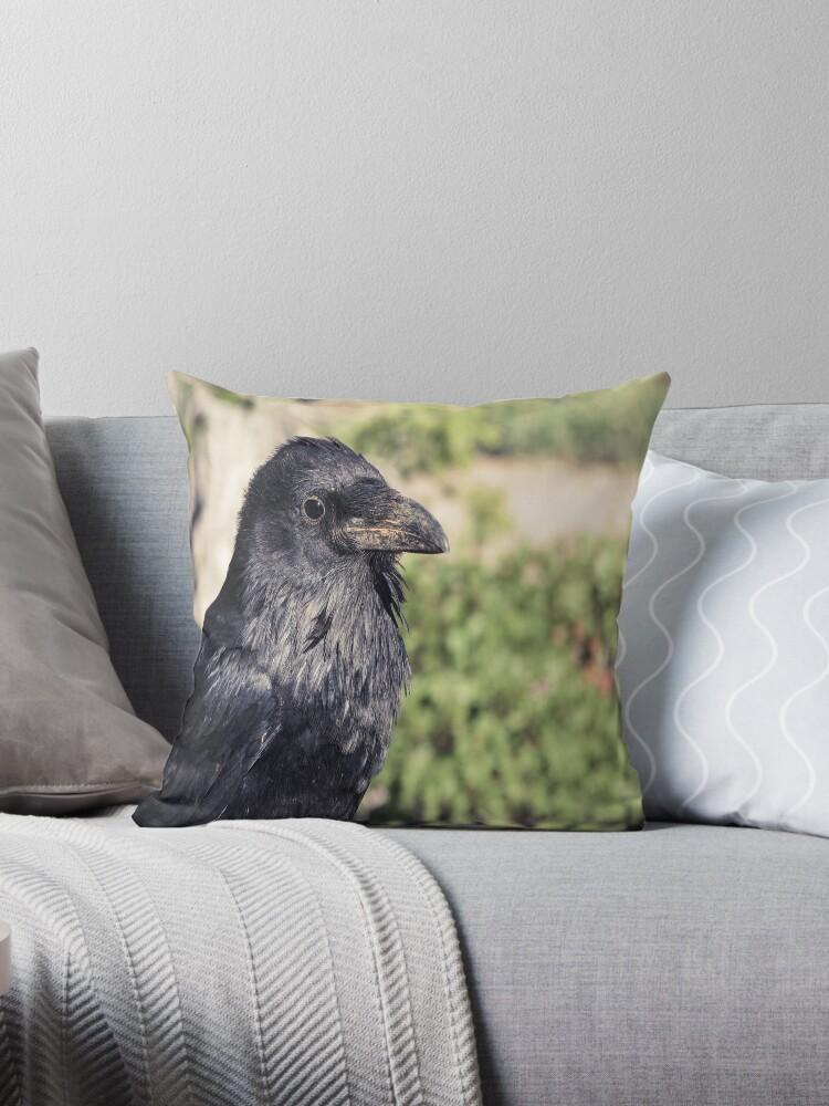 Corvus corvax, Common Raven by David Orr