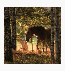 The horse and the sunset Photographic Print