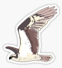 Osprey Bird Flying Sticker