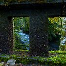 Rain Forest Bridges by Elaine Bawden