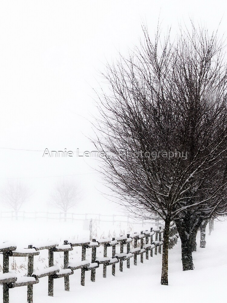 The Magic of Snow by ajlphotography