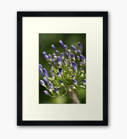 Glowing in the Sun Framed Print