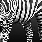 Zebra: Patterns in Nature by Rustyoldtown