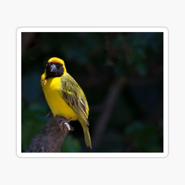 Bright Yellow Weaver Sticker