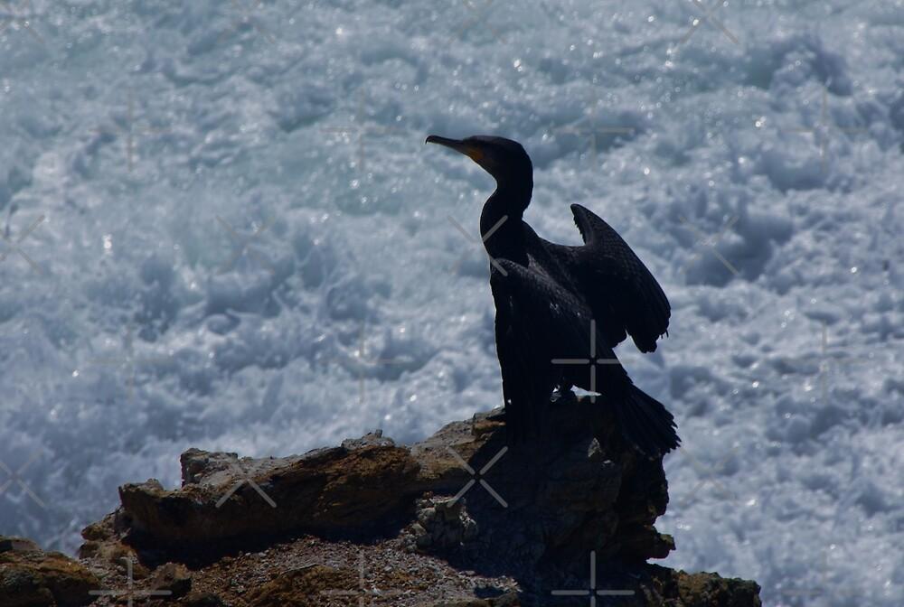 Sea / Bird by Liz Worth