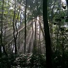 Sunbeams by naranzaria
