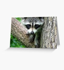 RACCOON PORTRAIT WITH PAWS & CLAWS  Greeting Card