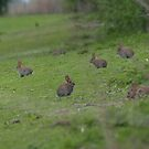 Rabbits by mps2000