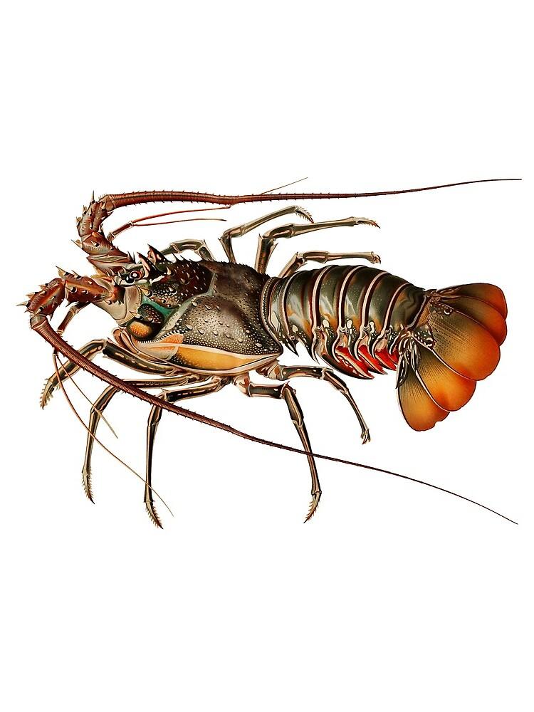 Vintage Spiny Lobster by billythekidtees