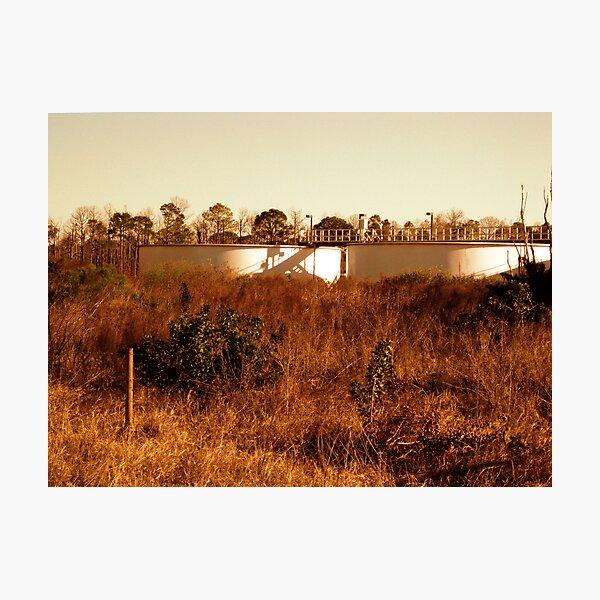 Water Plant Photographic Print