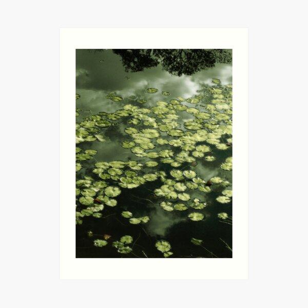 Metallic Water Lilies Art Print